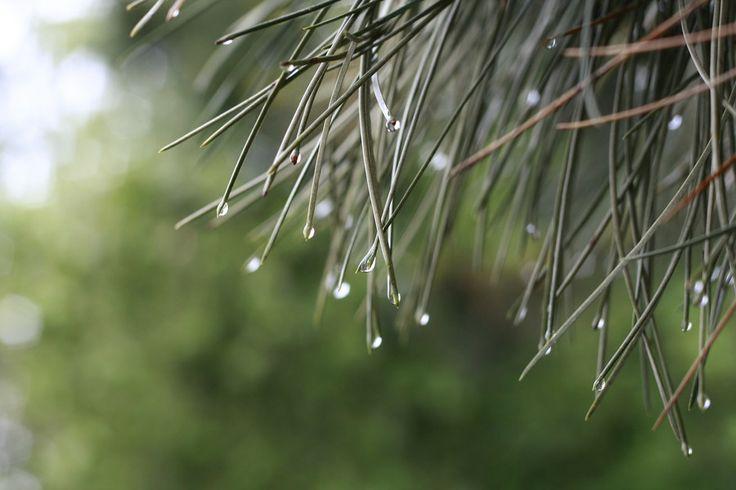 rainydrops by mircea mustatea on 500px