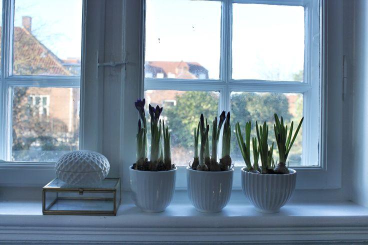Forår i stuen