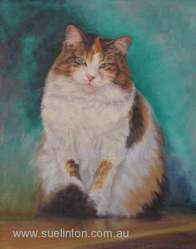 A memorial portrait of Fluff a rescue cat.