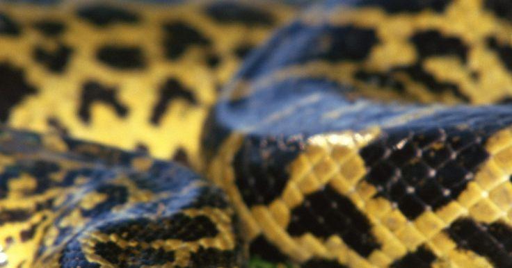 ¿Que tipos de animales se encuentran en los ecosistemas de los ríos?. El número de animales que viven en y alrededor de los ríos de todo el mundo es realmente inmenso. Miles de especies de peces, aves, mamíferos, reptiles, anfibios e insectos hacen de los ecosistemas fluviales su casa. Los ríos contienen depredadores, como la anaconda, y presas, como el camarón de agua dulce. A pesar de los ríos, con su continuo ...