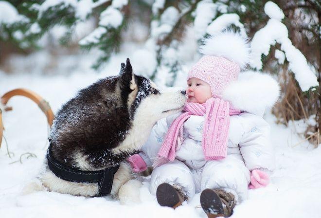 funny video, funny animals,cat,dog,foto,Фото приколы, юмор,смех, funny, животные,коты,видео,