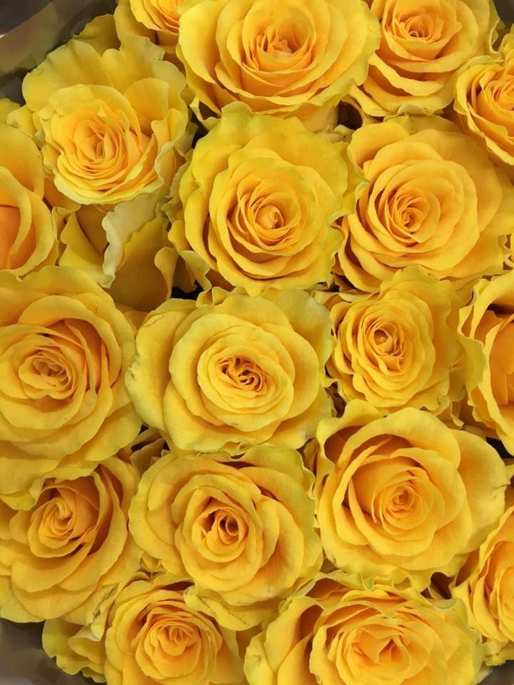 Newest Pictures Yellow Roses Varieties Suggestions Yellow Roses