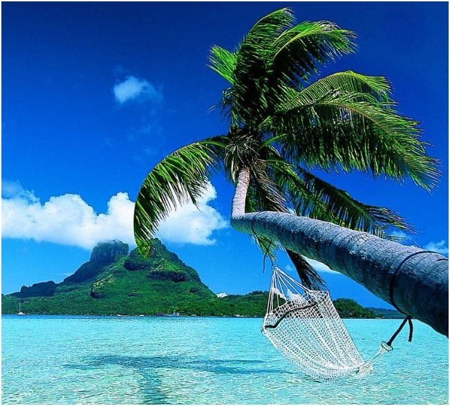 That hammock is calling my name...