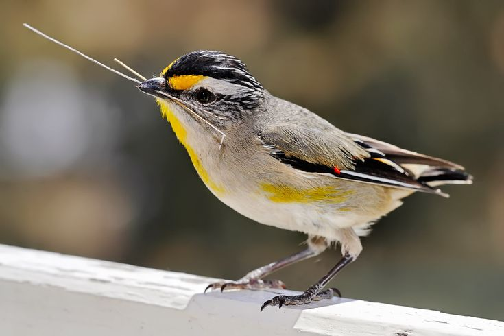 List of birds by common name - Wikipedia, the free encyclopedia