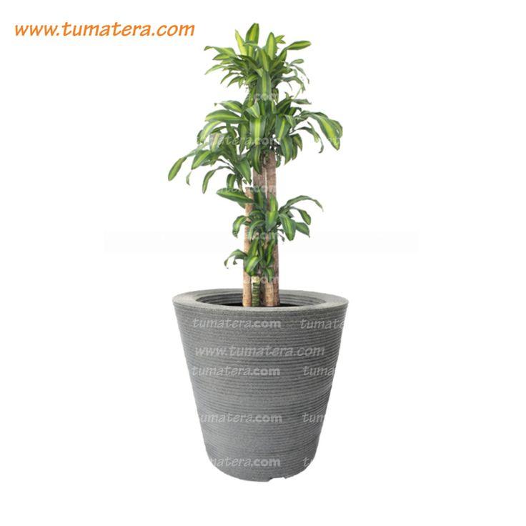 Encuéntralas en: https://www.tumatera.co/products/combo-conica-59cm-con-palo-de-brasil/