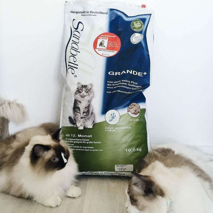 #Sanabelle dry cat food is back in stock! Popular among pedigree cat owners it's no surprise Sanabelle cats always have lush and lustrous fur like Fabs and Olaf here.  : @spoiltbytes