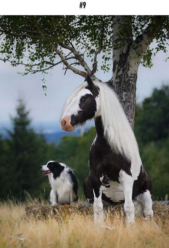 "We always joke around by saying ""this is my brother from another mother"" when we share a great similarity in appearance with someone. While this does not only happen to human beings, animals resemble each other too! It's not only between the same species, but also among different animals. This kind of resemblance can happen from dog and cat, to dog and horse and even dog and rabbit."