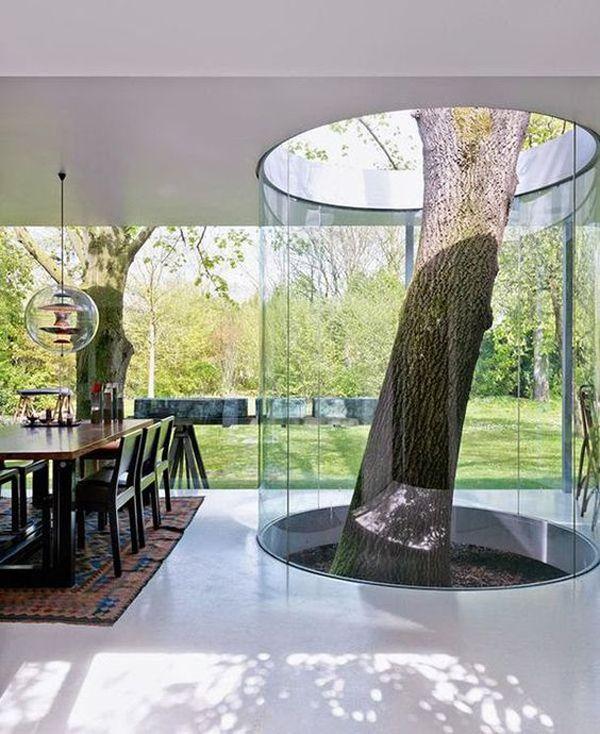 Amazing Artistic Tree Inside House Interior Designs Home Garden