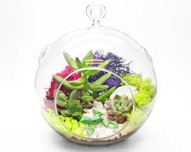 Plant Nite. Create terrariums at local restaurants.