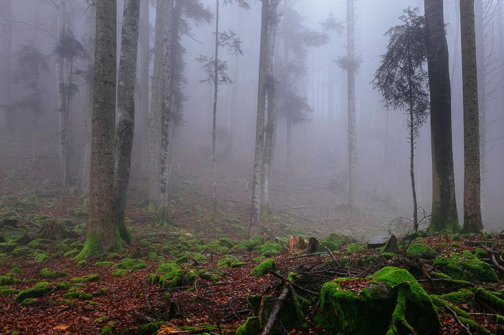 mystic mist 2
