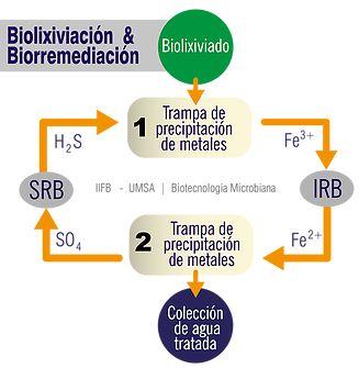 biolixiviación biorremediación