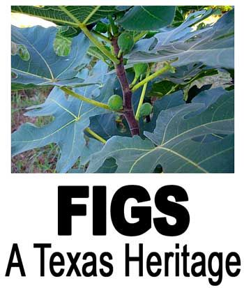 Figs: A Texas Heritage.  Lots of info on varieties and growing info.