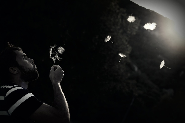: Trav'Lin Lights, Dandelions Clocks, Portraits Dandelions, Artists Inspiration, Fly Lights, Photography Fly
