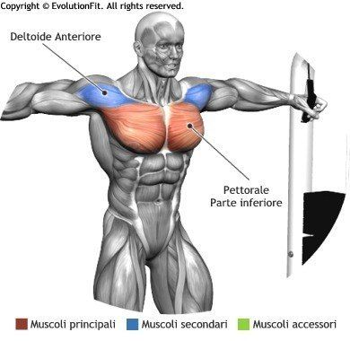 Cable Crossover Muscle Activation