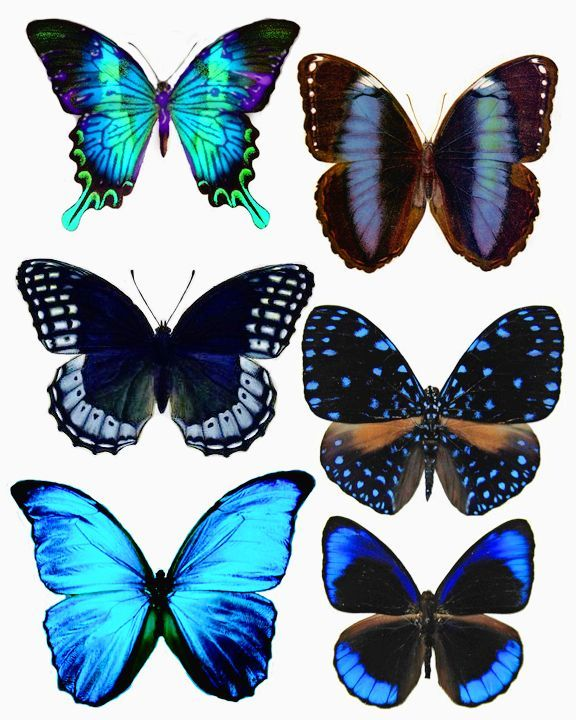 Butterflies could print in grayscale and color or paint - Papillon imprimer ...