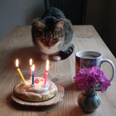 Какие домашние животные не имеют рецепторов различающих сладкий вкус? коты.