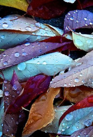 Lluvia sobre las hojas......