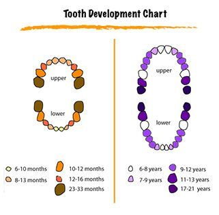 Teeth Eruption    The first baby teeth that come into the mouth are the two bottom front teeth. You will notice this when your baby is about 6-8 months old. Next to follow will be the 4 upper front teeth, and the remainder of your baby's teeth will appear