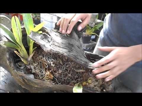 Abono casero para la floración de orquídeas - Alto en Potasio || Orquiplanet - YouTube
