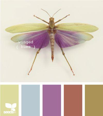 winged hues