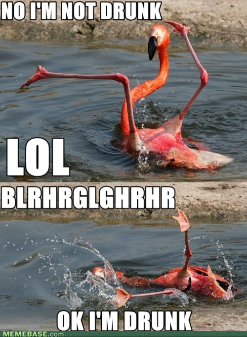 party flamingo: Laughing, Giggl, Funny Stuff, Humor, Drunk Flamingos, Smile, Hilarious, So Funny, Animal