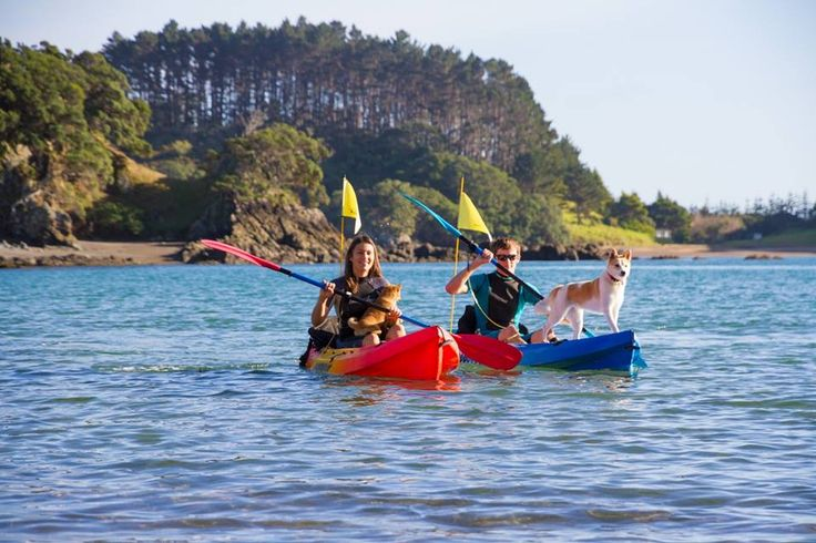 With over 15,000 of coastline kayaking is a fun sport everyone can do - even with the pets in tow. To find out more about Kayaking in New Zealand go to www.SeeandDo.co.nz
