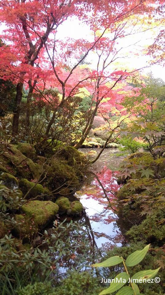 17 best images about frederique dumas japanese gardens for Jardin japonais contemporain