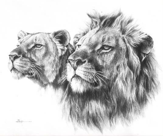 Image detail for -drawing_lion_charcoal.jpg picture by princessandy96 - Photobucket