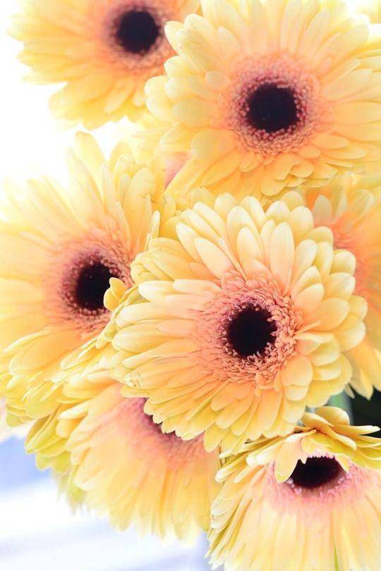 Natalca flowers pinterest - Housse de coussin 65 65 ...