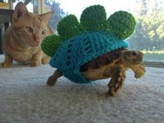 Best Tegu Maddness Images On Pinterest Reptiles Amphibians - 22 adorable animals wearing miniature sweaters
