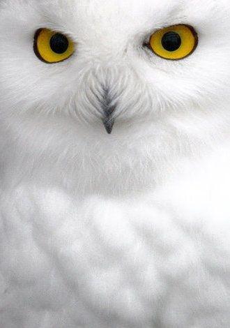 "13. ""Snow Hoot!"""
