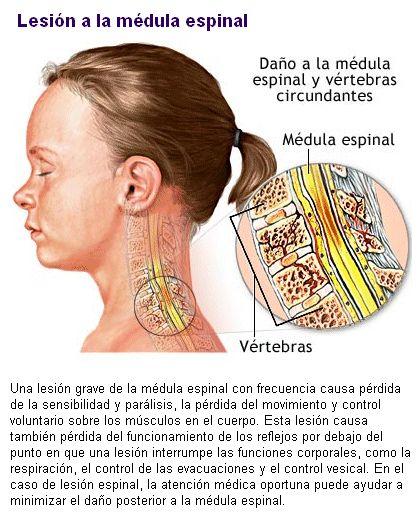 El cuerpo humano. Sistema Nervioso. Introducción a las Ciencias de la Salud