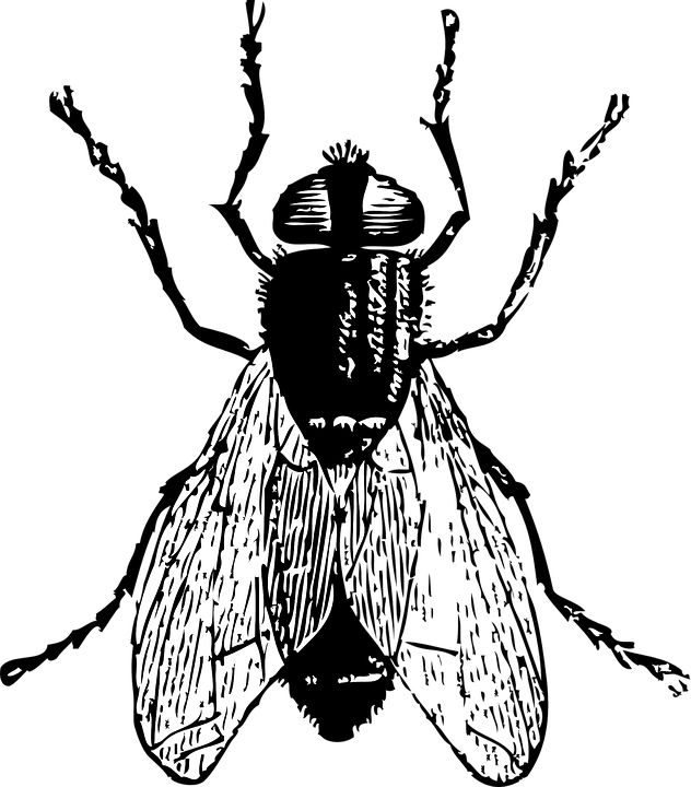 Free Image On Pixabay Black Insect Pest Bug Insects Fly Drawing Bug Art
