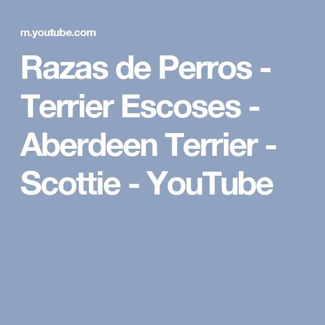 Razas de Perros - Terrier Escoses - Aberdeen Terrier - Scottie - YouTube