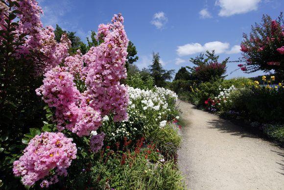 Promenade fleurie sur le lac de #Mimizan et #Aureilhan