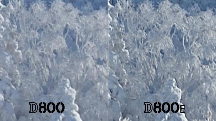 NikonD800とローパスフィルタ無しモデルD800Eの画像比較
