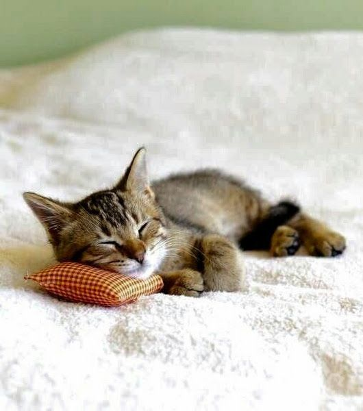 Little kitten sleeping on a little pillow. Can't help but pin this one!