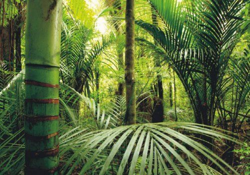 Fototapete Tapete Natur Dschungel Wildniss Pflanzen Foto