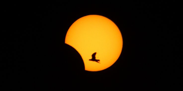 It's the last solar eclipse we'll see until 2016.