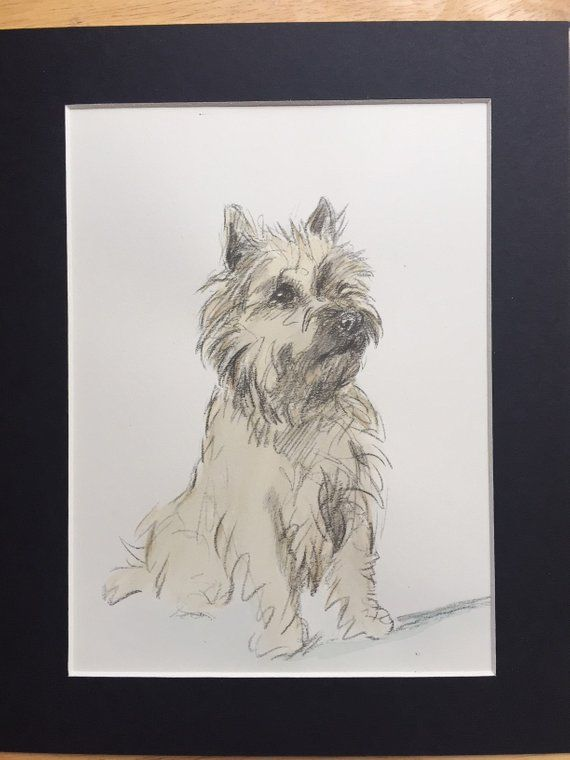 Cairn Terrier Vintage Mounted 1937 Hand Coloured Mac Lucy Dawson