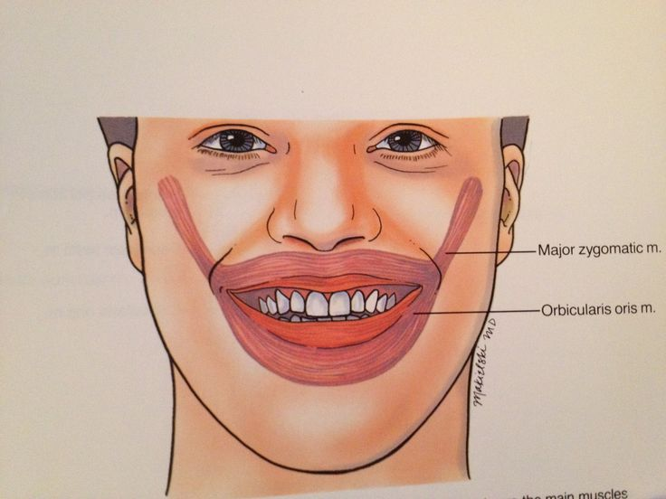 Facial Muscles Smile 72