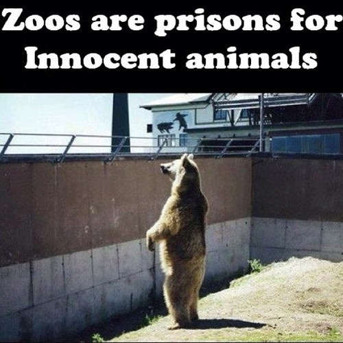 Argumentative essay on zoos prisons or sanctuaries
