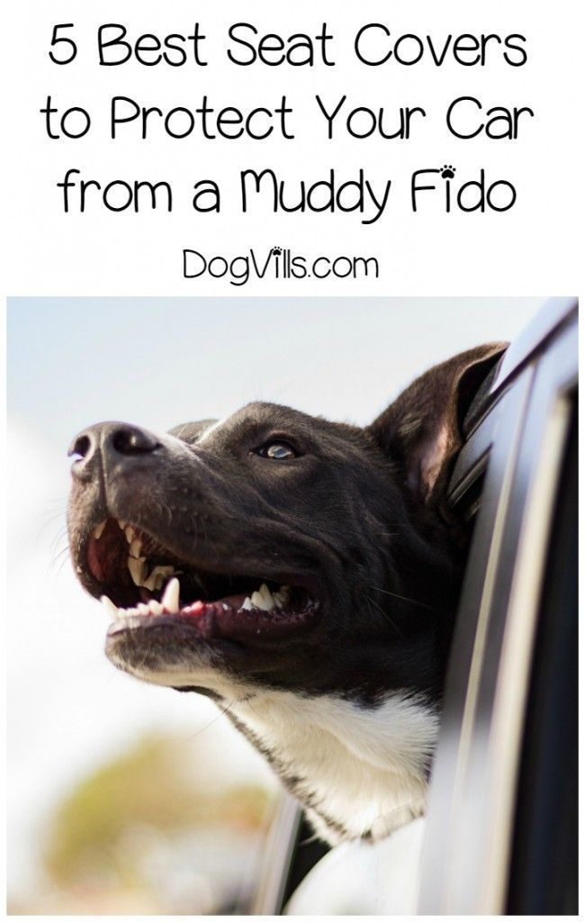 If you take your dog for rides in the car often, a good seat cover is one of the most important dog accessories you'll need for your own sanity. No one likes cleaning up muddy foot prints or trying to get wet dog smell out of their upholstery, right? Check out our picks for the best dog car seat protectors to keep Fido from wrecking your car.