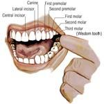 Tooth Decay Symptoms - What Is Causing You Trouble? - http://www.healtharticles101.com/tooth-decay-symptoms-what-is-causing-you-trouble/#more-3245