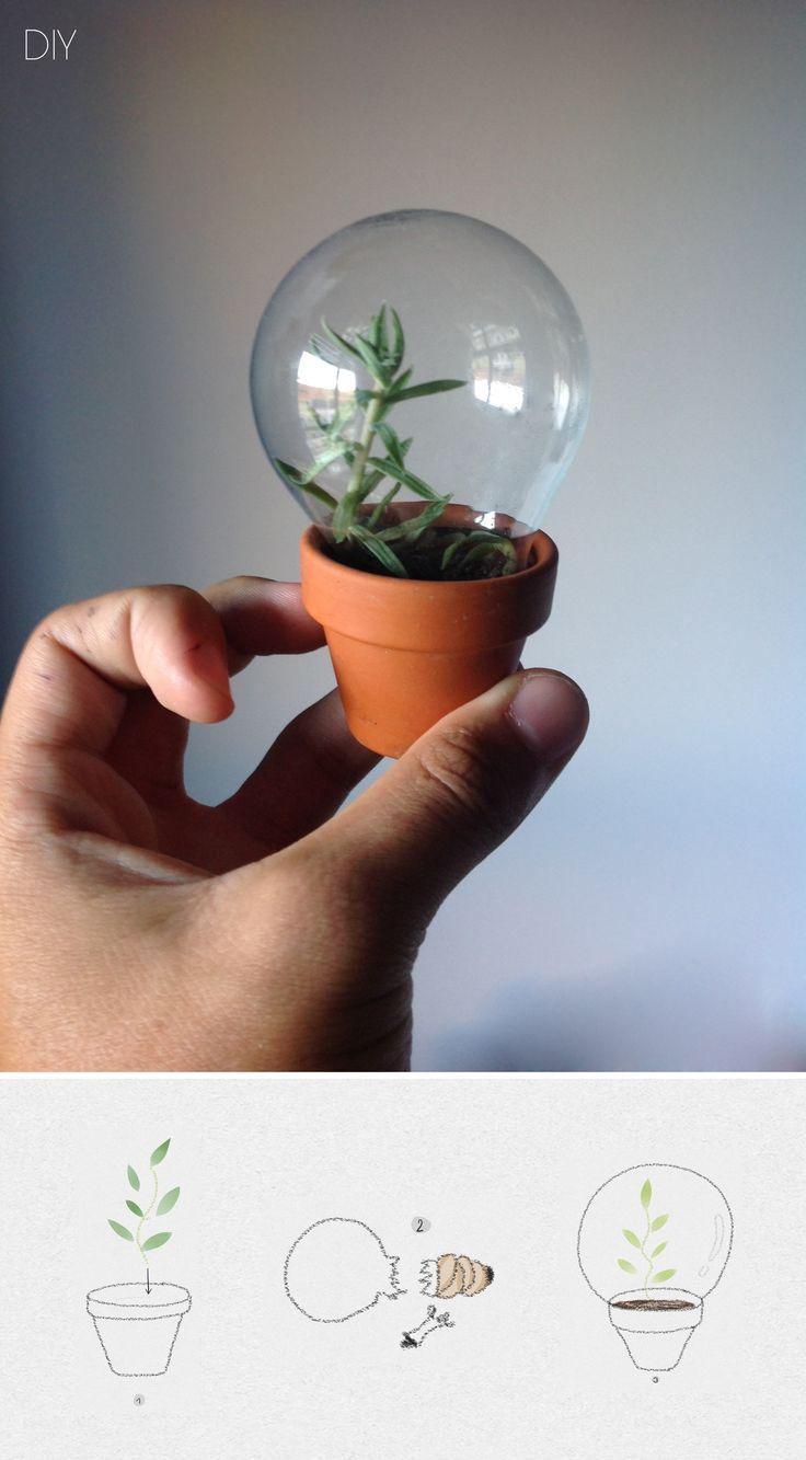 Lamp House, preferably put a cat inside the lamp #diy #plants #garden #decorations