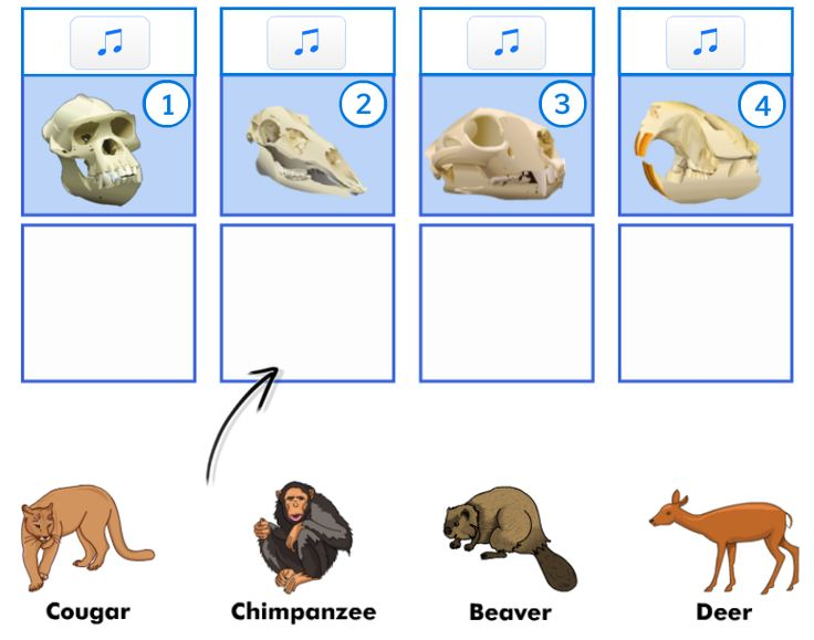 describe how characteristics help to classify Classification scientists classify organisms into groups  classification allows us to organize living things in ways that help us understand them they are grouped based on many criteria, placing those that have similar characteristics or those that are closely related together, and separating them from others which are more distantly.