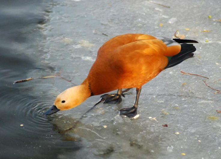 Ritka és gyönyörű kóborló madár érkezett az Alföldre | Sokszínű vidék