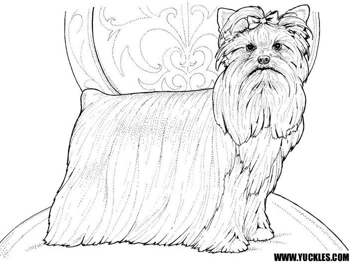 90 best dog pic images on pinterest dog pic coloring for Yorkie coloring pages
