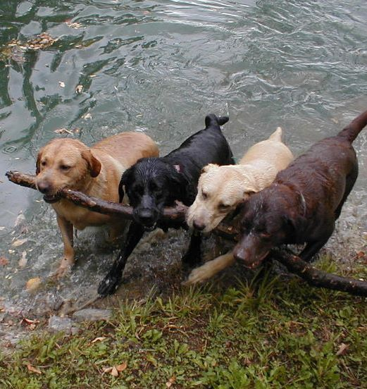 We're responsible branch managers!!  #dogsareawesome   #funny   #Petsworld