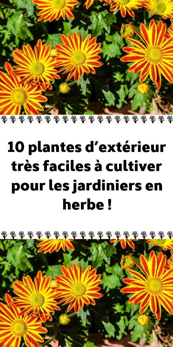 10 plantes d'extérieur très faciles à cultiver pour les jardiniers en herbe !